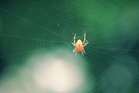 Churm Media&#039;s big orange tree spider