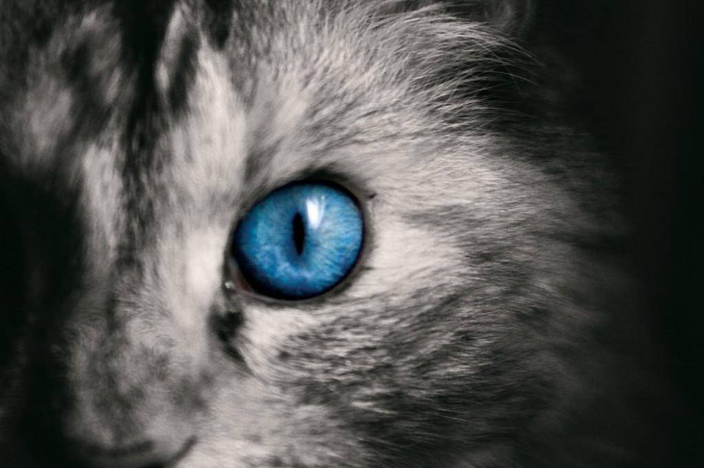 frankie-blue-eye