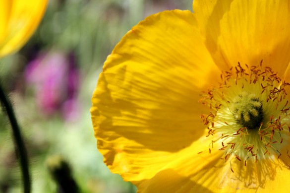The Getty Museum garden flower