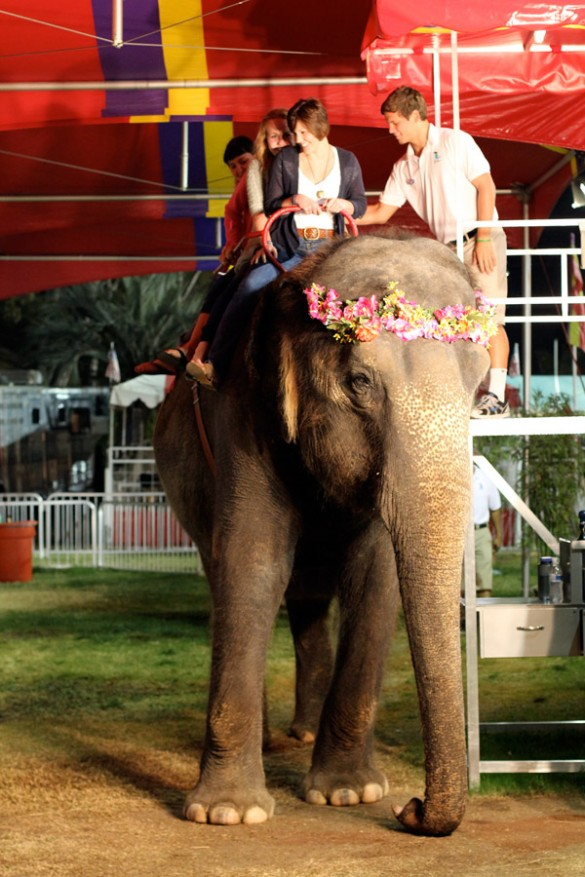 Kristen Schott riding on the back of an elephant at the OC Fair